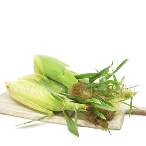 Fresh Organic Young Sweet Corn / Maize (piece)