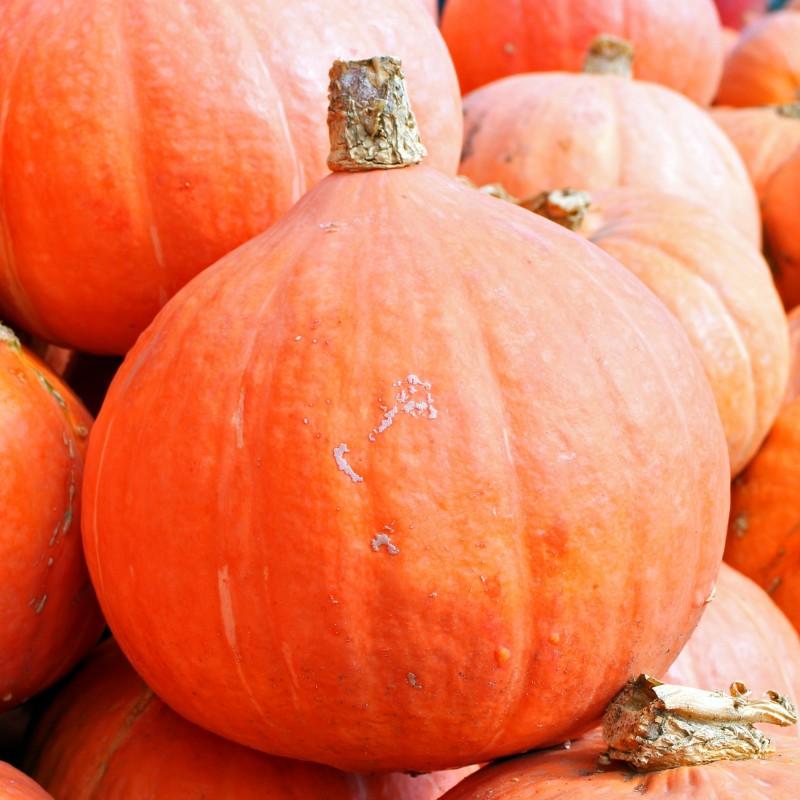 Fresh Organic Hokkaido Pumpkin (price per kilo)