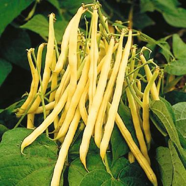 Organic yellow string beans (pack 250g)